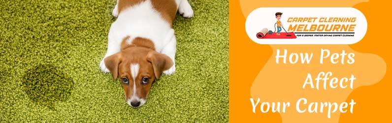 How Pets Affect Your Carpet